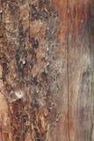 Vecchia struttura di legno ricca del granulo Immagini Stock Libere da Diritti