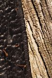 Vecchia struttura o fondo di legno bruciata ed incombusta fotografia stock