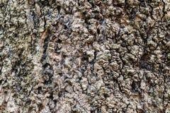 Vecchia superficie dell'albero Immagini Stock