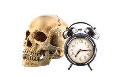 Vecchia sveglia e cranio umano su fondo bianco Immagini Stock
