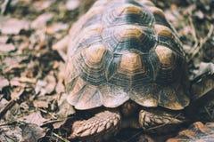 Vecchia testa del pellame delle tartarughe immagine stock libera da diritti