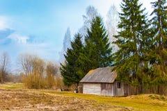 Vecchia tettoia di legno fra gli abeti e le betulle Villaggio bielorusso immagini stock libere da diritti