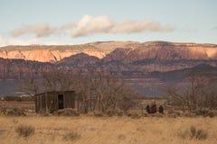 Vecchia tettoia e trattore che si siedono fra gli alberi nudi di inverno sulla MESA del ` s di Smith nell'Utah del sud immagine stock libera da diritti