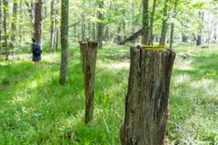 Vecchia traccia di Post Alongside Hiking del recinto fotografia stock