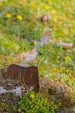 Vecchia traversa di legno Immagini Stock