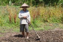 Vecchia vanga della tenuta della lavoratrice agricola al campo Bali, Indonesia Fotografia Stock