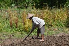 Vecchia vanga della tenuta della lavoratrice agricola al campo Bali, Indonesia Fotografie Stock Libere da Diritti
