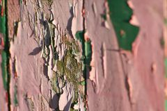 Vecchia vernice Fotografia Stock