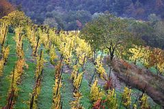 Vecchia vigna in Italia fotografie stock