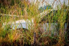 Vecchie automobili di Abandone nei relitti in profondità in foreste Fotografie Stock