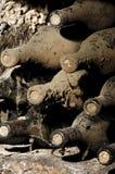 Vecchie bottiglie in una cantina Fotografia Stock Libera da Diritti