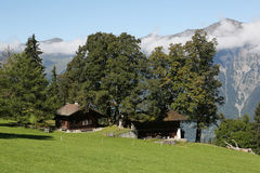 Vecchie case con l'albero nelle alpi nel Bernese Oberland, Svizzera Fotografia Stock Libera da Diritti