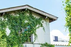 Vecchie case con l'edera. Immagine Stock Libera da Diritti