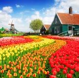 Vecchie case di Zaanse Schans, Paesi Bassi Fotografia Stock Libera da Diritti