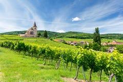 Vecchie chiesa e vigne nel villaggio di Hunawihr nell'Alsazia, Francia Fotografia Stock Libera da Diritti