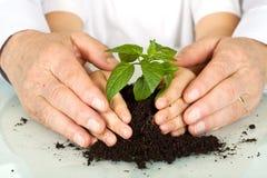 Vecchie e giovani mani che proteggono una nuova pianta