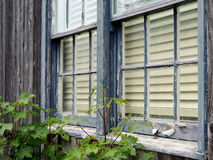 Vecchie finestra e pittura della sbucciatura Fotografia Stock Libera da Diritti