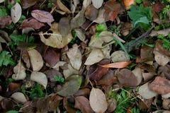 Vecchie foglie di autunno Fotografia Stock