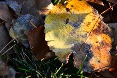 Vecchie foglie di decomposizione fotografia stock