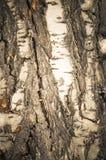 Vecchie foto antiche stilizzate della corteccia di albero Immagine Stock Libera da Diritti