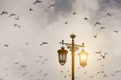 Vecchie iluminazioni pubbliche con i corvi Immagini Stock