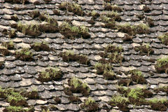 Vecchie mattonelle con muschio Fotografia Stock Libera da Diritti