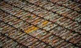 Vecchie mattonelle invase con muschio Immagini Stock