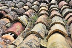 Vecchie mattonelle in Osp 2 Immagine Stock