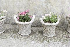 Vecchie piante in vaso Fotografia Stock