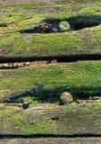 Vecchie plance muscose dalla fine Fotografia Stock Libera da Diritti