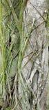 Vecchie radici e radici appena nate Fotografia Stock Libera da Diritti