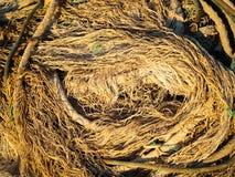 Vecchie reti e corde Fotografie Stock