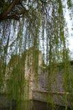 Vecchie rovine del castello sul fiume Fotografie Stock Libere da Diritti