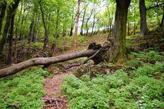 Vecchie rovine di pietra del castello nel giorno di estate caldo della foresta Fotografie Stock