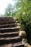 Vecchie scale Immagine Stock