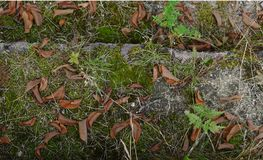 Vecchie scale di pietra coperte di muschio e di erba con le foglie cadute asciutte immagine stock libera da diritti