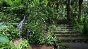 Vecchie scale di pietra nella giungla con una cascata archivi video