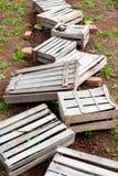Vecchie scatole per le verdure Immagine Stock