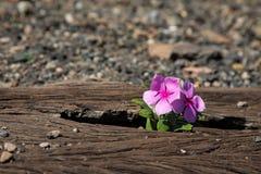 Vecchie strade ferrate usate dentro e piccolo fiore a colori Fotografia Stock