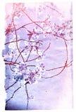 Vecchie strutture del fiore di carta Immagine Stock