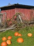 Vecchie tettoia e zucche immagini stock libere da diritti