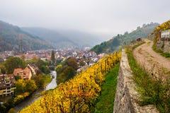 Vecchie vigne in autunno, Thann, Francia Fotografia Stock Libera da Diritti