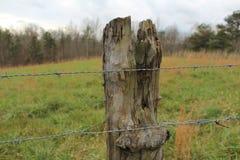 Vecchio alberino della rete fissa fotografia stock