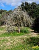 Vecchio albero Fotografia Stock Libera da Diritti