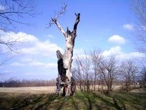 Vecchio albero Fotografie Stock