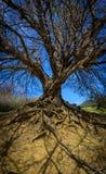 Vecchio albero Immagini Stock Libere da Diritti