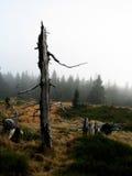 Vecchio albero Fotografie Stock Libere da Diritti