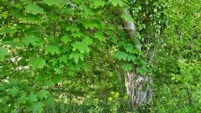 Vecchio albero Immagini Stock