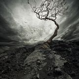 Vecchio albero asciutto fotografia stock libera da diritti