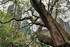 Vecchio albero asciutto in Cina Fotografie Stock Libere da Diritti